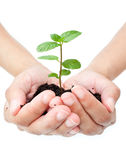 Plant in hands Royalty Free Stock Photography