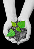 Plant in hands. Two hands holding a  plant Royalty Free Stock Images