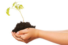 Plant in hands Royalty Free Stock Photo