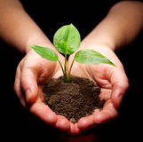 Plant is in hands Royalty Free Stock Photos