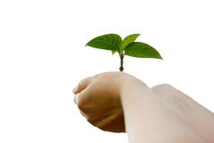 Plant in hands Stock Photo
