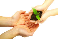 Plant between hands Royalty Free Stock Image
