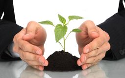 plant between hands Stock Photography