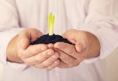Plant in hands against white. A plant in hands against white background Royalty Free Stock Photos