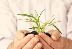 Plant in hands against white. A plant in hands against white background Royalty Free Stock Photography