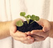 Plant in hands against white. A plant in hands against white background Stock Images