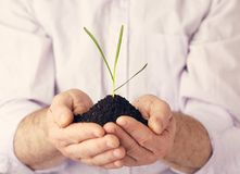Plant in hands against white. A plant in hands against white background Stock Image