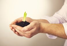 Plant in hands against white. A plant in hands against white background Royalty Free Stock Image