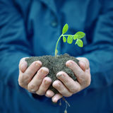Plant in hands of agricultural worker Stock Photos