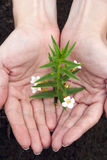 Plant in a hands royalty free stock photos
