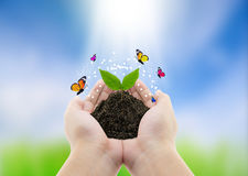 plant in hands and butterfly - nature background, environment co Royalty Free Stock Photography