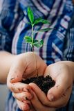 Plant in hands - the concept of new life and safety. Plant in hands - the concept of new life and safety royalty free stock images
