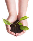 Plant in a hands Stock Photo
