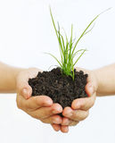 Plant in hands supporting nature. Plant in hands showing a new life Stock Image