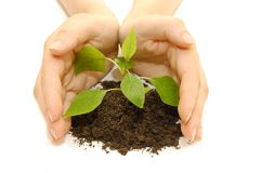 Plant in hands on white Stock Images