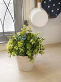 Plant and hanging pot in the kitchen Royalty Free Stock Photography
