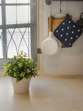 Plant and hanging pot in the kitchen Royalty Free Stock Image