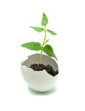 A plant hatching from egg. Close up of a plant hatching from egg stock image