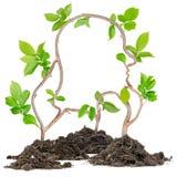 Plant Head Stock Photo