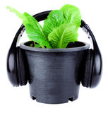 Plant with headset Stock Photography