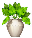 A plant with a heart-shaped leaves Royalty Free Stock Images