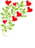 Plant with hearts Stock Image