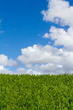 Plant Hedge Sky and Clouds Royalty Free Stock Photos