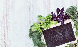 Plant herbs Royalty Free Stock Images