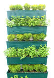 Plant herbs in pots hang on the wall Royalty Free Stock Photos