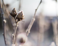 Plant in hoarfrost Stock Image