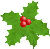 Plant Holly Stock Image
