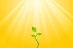 Plant of Hope Stock Photo