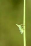 Plant hopper Stock Image