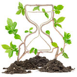 Plant Hourglass Royalty Free Stock Photos