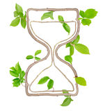 Plant Hourglass. Plants with leaves forming hourglass isolated on white Royalty Free Stock Image