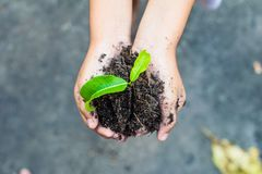 Plant. How to plant seedlings growth stock images