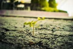 Plant. How to plant seedlings growth royalty free stock image