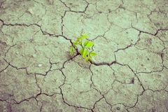 Plant. How to plant seedlings growth royalty free stock images