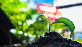 Plant. How to plant seedlings growth stock photography