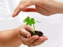 A plant in human hands Royalty Free Stock Photo