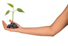 Plant in humans hand Stock Photos