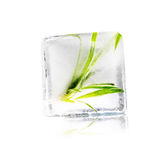 Plant in ice cube Royalty Free Stock Image