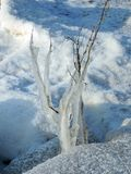 Plant in ice on Curonian spit shore, Lithuania Royalty Free Stock Photo