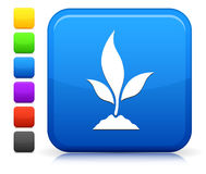 Plant Icon on Square Internet Button Collection stock photo