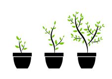 Plant icons Royalty Free Stock Image