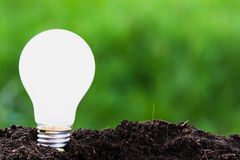 Plant Idea. Light bulb plant in soil as idea or energy concept Royalty Free Stock Photography