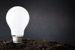 Plant Idea Stock Images