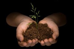 Free Plant In Child S Hand Royalty Free Stock Photo - 4162345