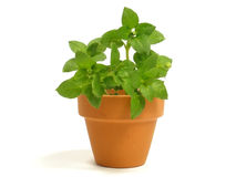 Plant In Flowerpot Stock Photo