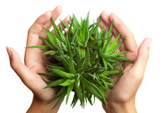 Free Plant In Hands Stock Image - 10571931